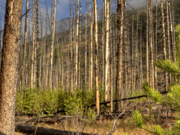 Forest Fires and Climate Change